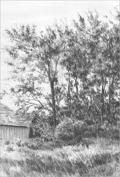 Drawing Grass And Weeds Tutorial Part 2 By Diane Wright