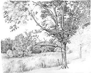 Tips For Drawing Summer Trees