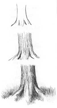 Gallery For gt Tree Trunk Sketch