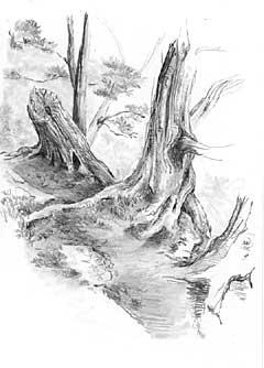 Art Drawing Tree